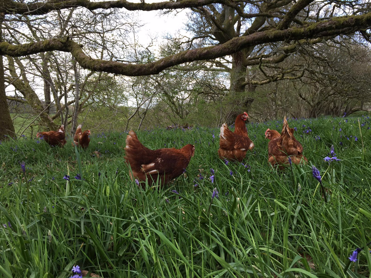 Free Range Egg Recipes for Spring